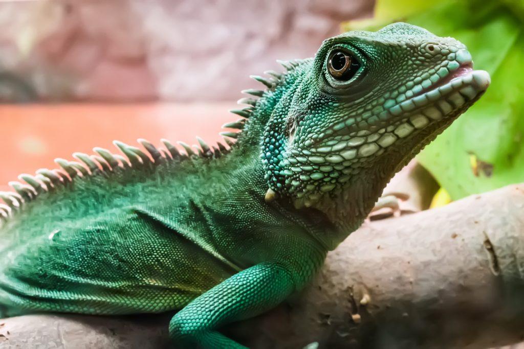 Exotic Pet