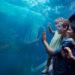 Take A Family Field Trip To The Texas State Aquarium